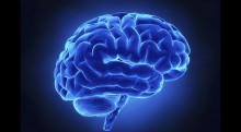 Comment fonctionne le cerveau lorsque nous jeûnons ?